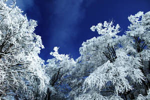 Winterfresh by P11K