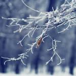 Freezing by StefanyKK