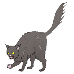 Random Dark Forest Cat