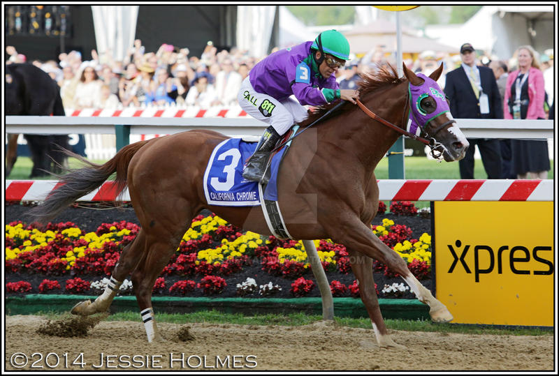 California Chrome Wins the Preakness by Jessie-kad
