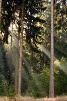 nature_044 by Lokidjb-stock