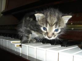 Ze grand pianist I