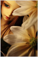 Just Pretty Flowers 1 by accusingsaturn