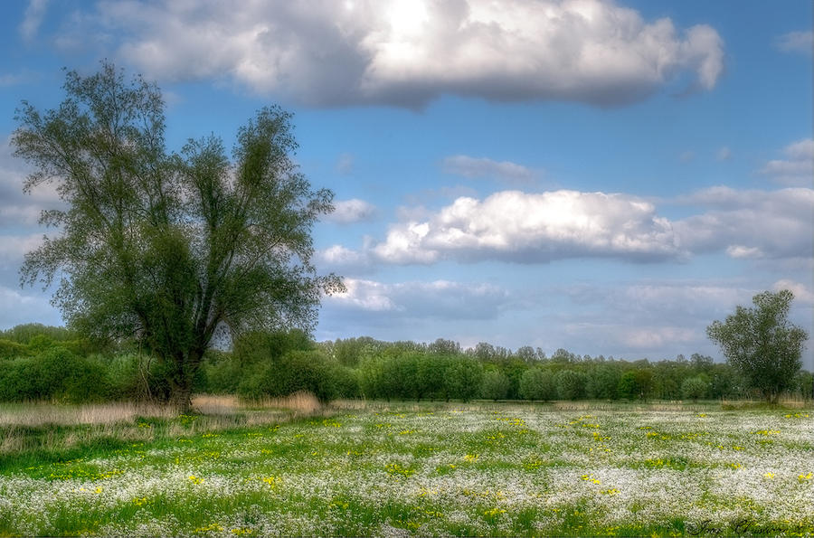 Spring Meadow by JacqChristiaan