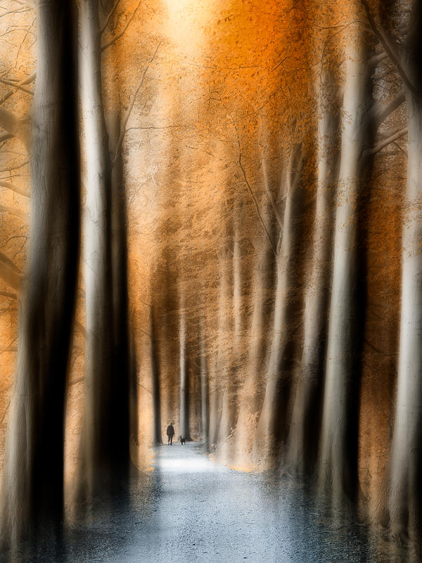 path through the orange forest by JacqChristiaan