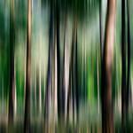 Forest Impression