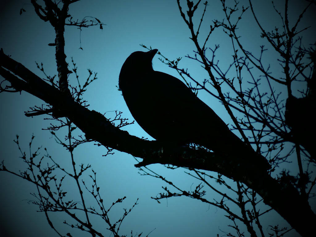 Crow Silhoutte 2 by Barghest1031