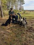 Three English Shepherds with their dad