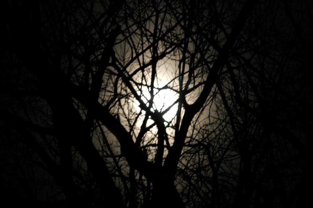 Tim Burton tree by Burkle on DeviantArt