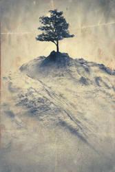 Trees - p1 of 3
