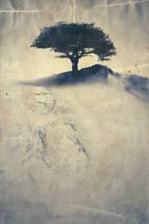 Trees - p3 of 3