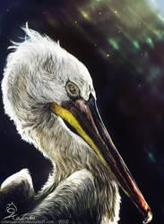 Portrait of a Pelican by CobraVenom