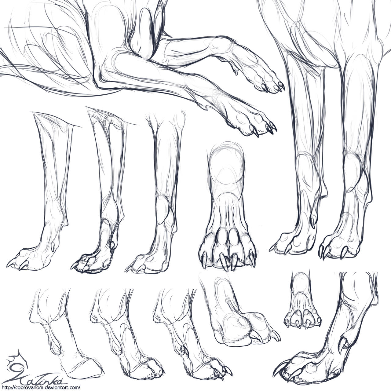 Dog Paw Drawing