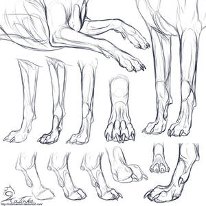 Study: Canine forepaws