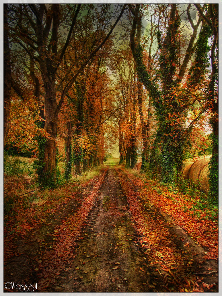 autumnal path by Weissglut