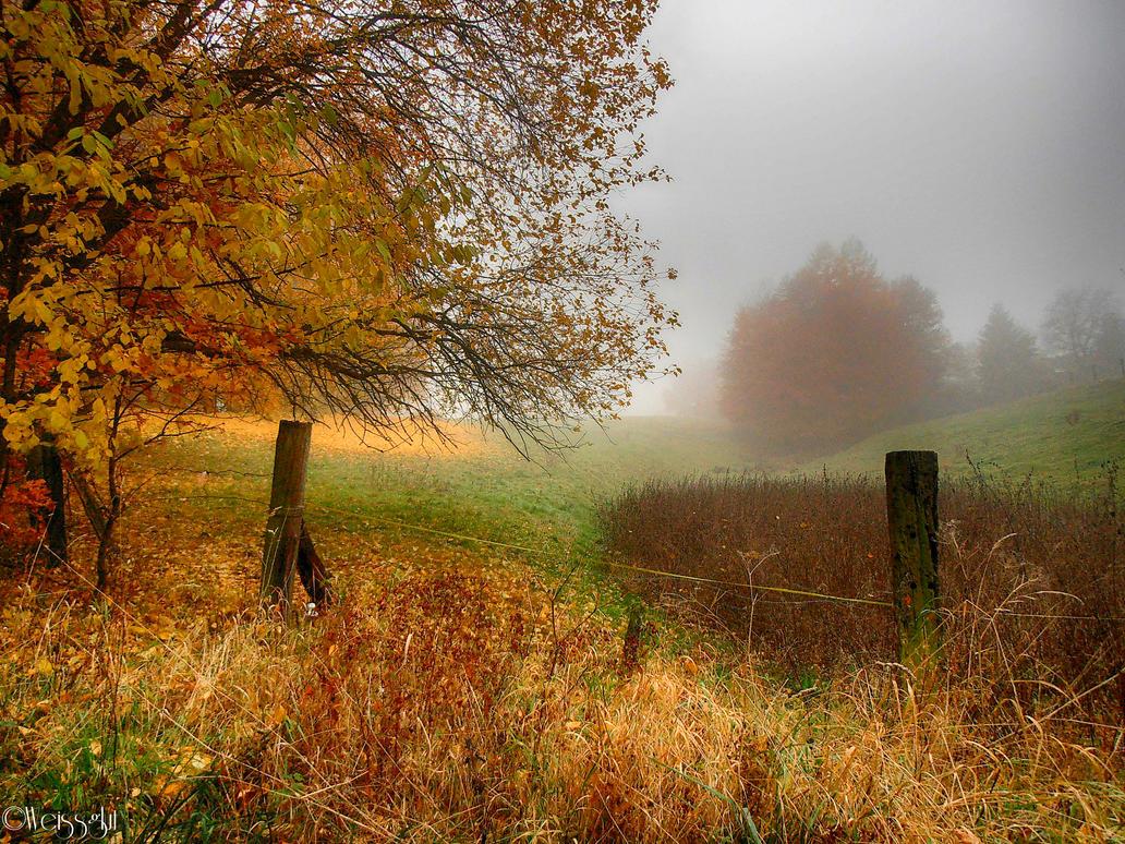 misty autumn II by Weissglut