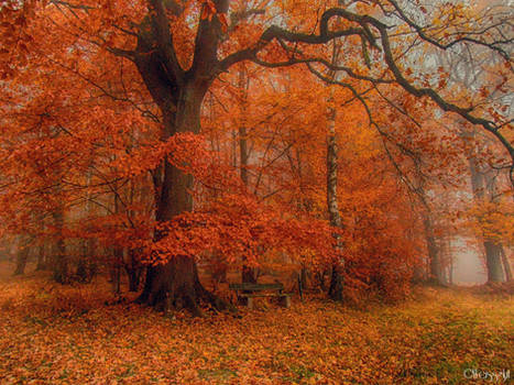 misty autumn III