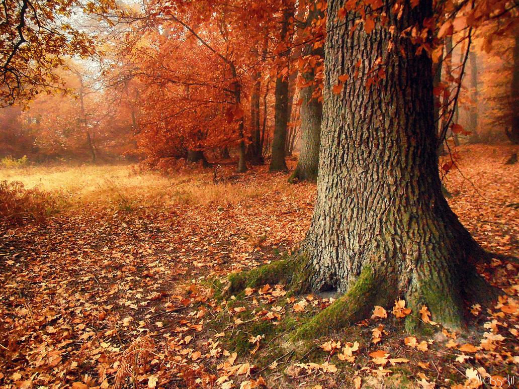 misty autumn VI by Weissglut