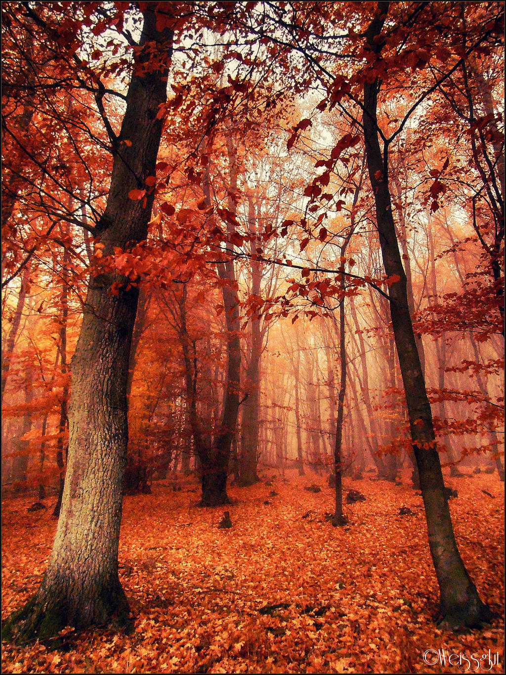 Autumn Forest Taiwan: Autumn Forest By Weissglut On DeviantArt