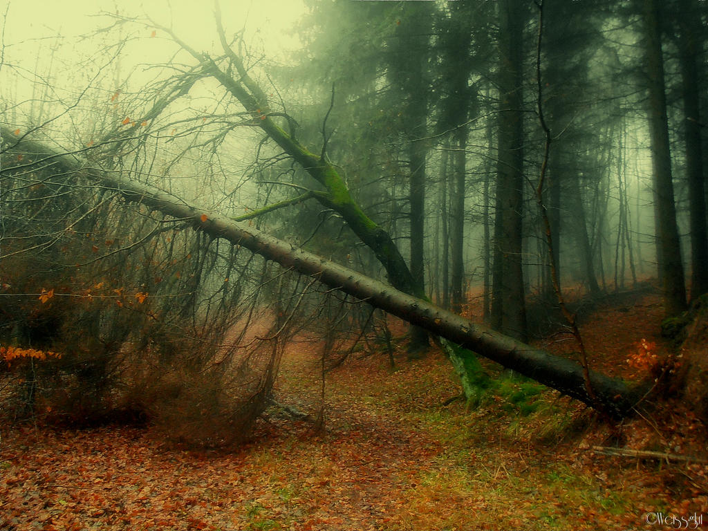 Dying nature by weissglut on deviantart - Tell tree dying order save ...