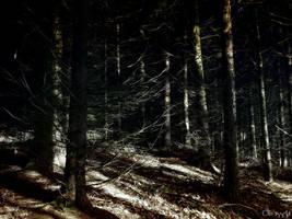 Grim Woods by Weissglut