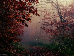 Fairy Wood V