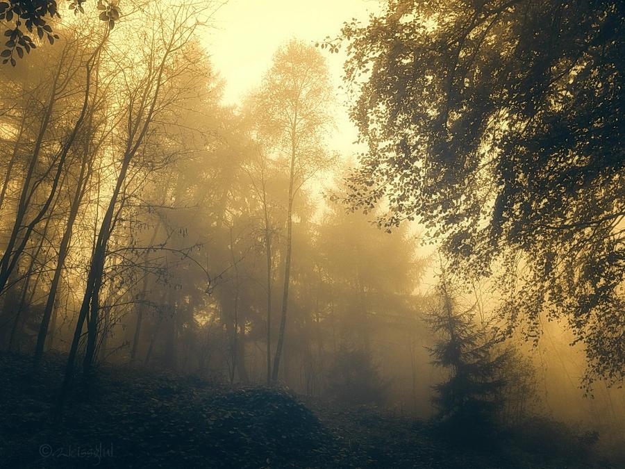 Mist Around by Weissglut