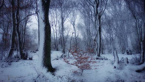 Snow Forest by Weissglut