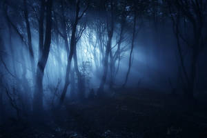 Mystic Forest Light by Weissglut