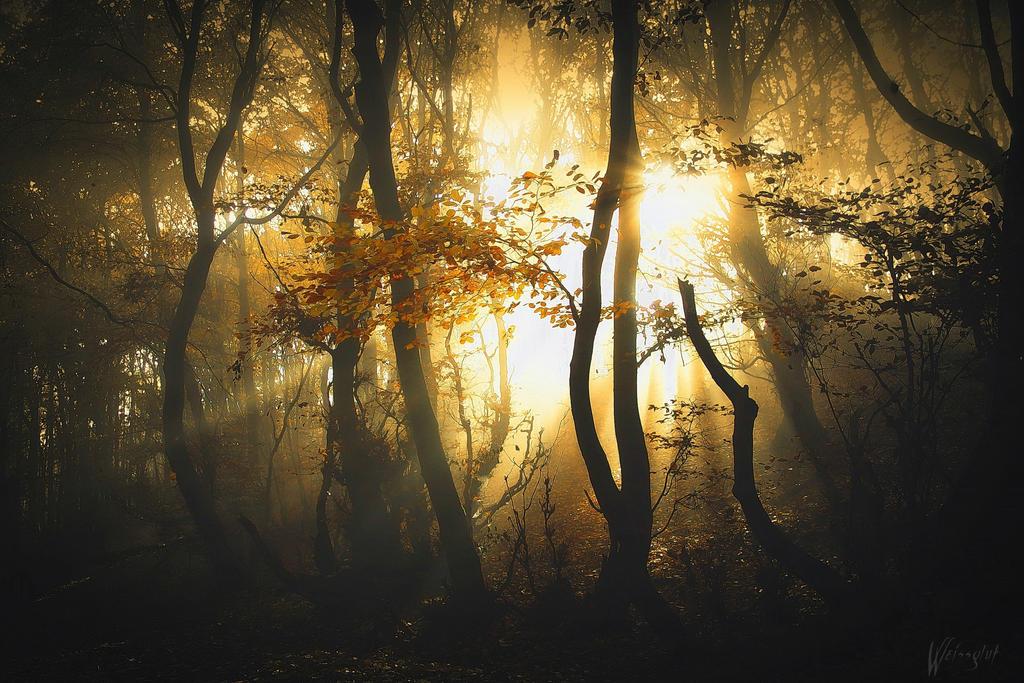 Golden Light by Weissglut