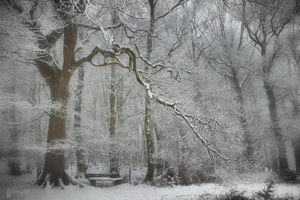 Snowy Tree by Weissglut