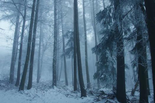 Snowy Days**
