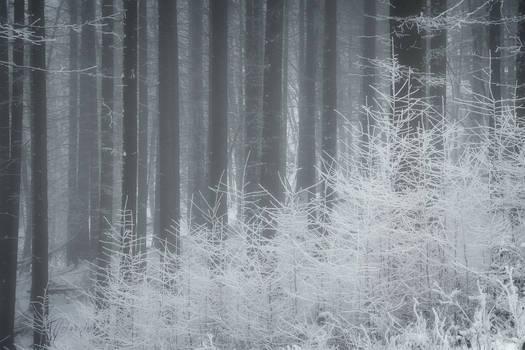 Snowy Days***