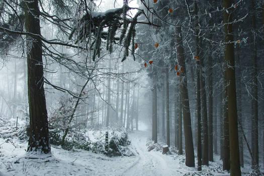 Snowy Days****