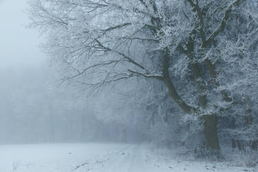 Snowy Days***** by Weissglut