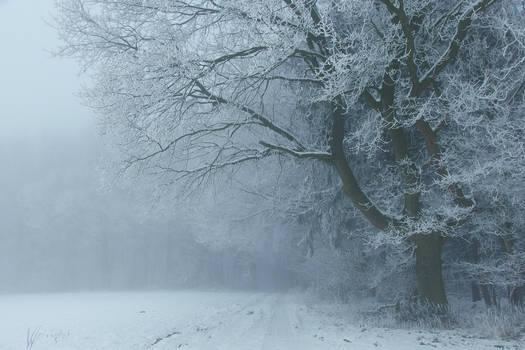 Snowy Days*****