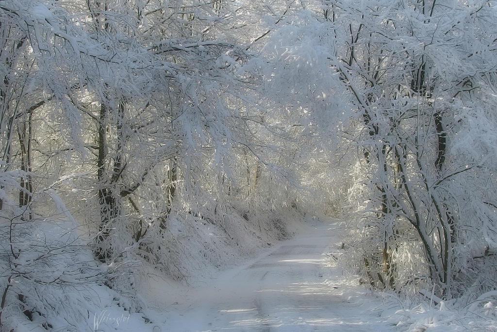 Winterworld by Weissglut