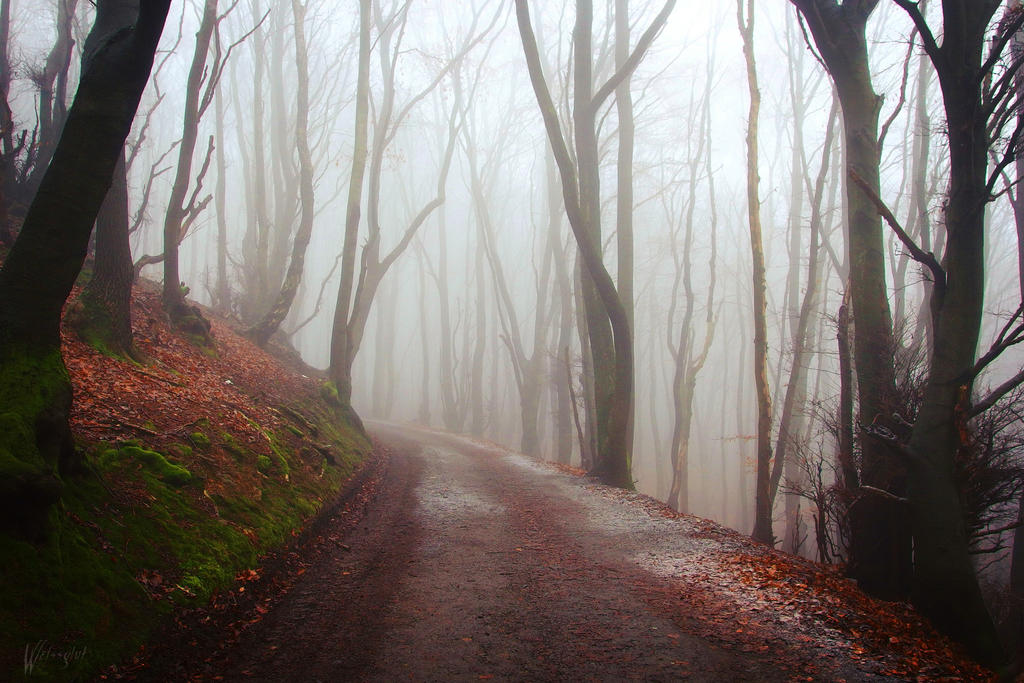 Cold Mist by Weissglut