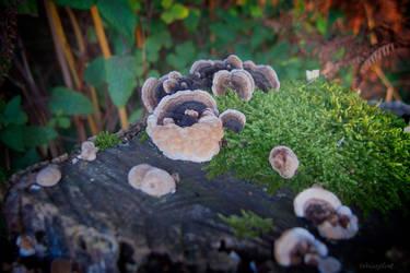 Tree Funghi I