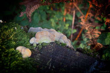 Tree Funghi II