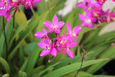 Pink flowers by chiefschic