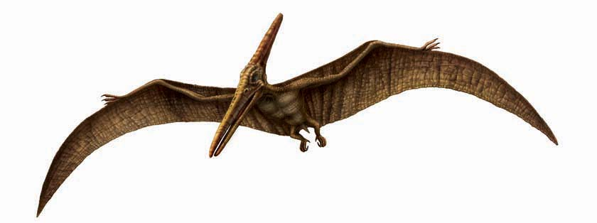 how to take a pteranodon