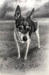 T.M's dog - pencil.