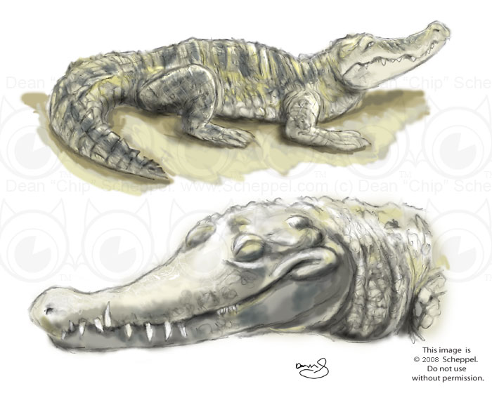 Crocodile Sketch by scheppel