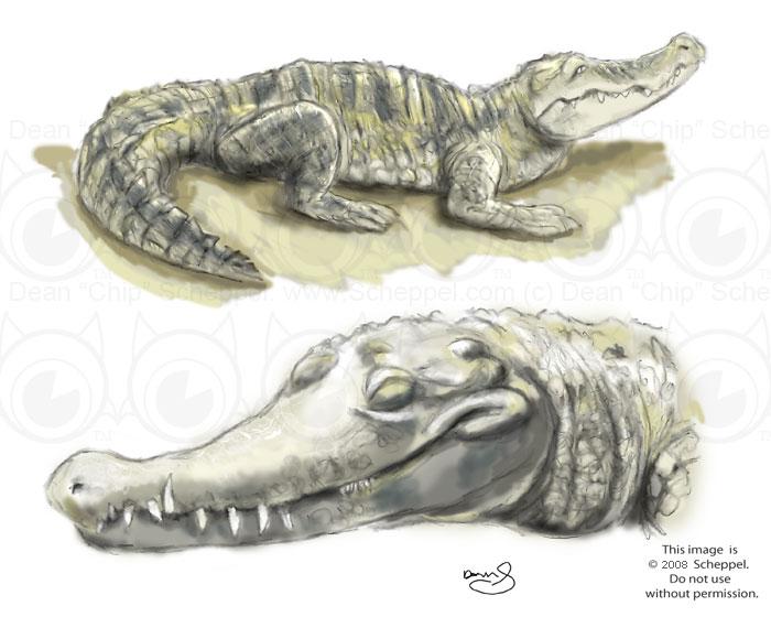 Crocodile Sketch by scheppel