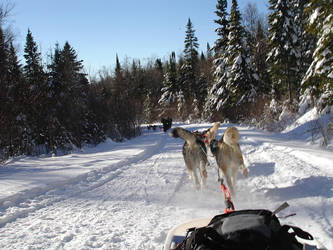 Dog Sledding at Val Des Lacs by Caity-o