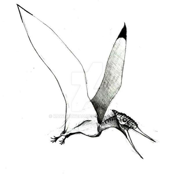 Muzquizopteryx coahuilensis