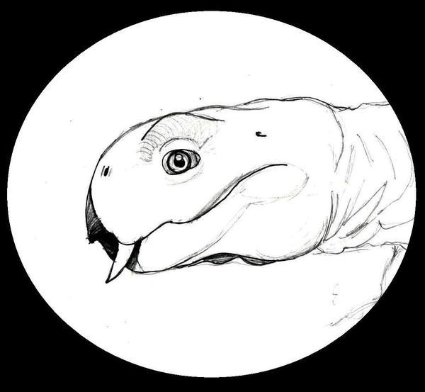 Petit Diictodon by Kawekaweau