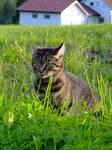 kitty stock 4