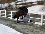 horse stock 16